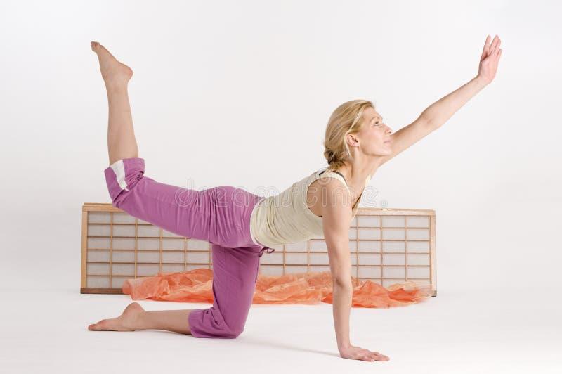 Yoga diagonally cat royalty free stock image