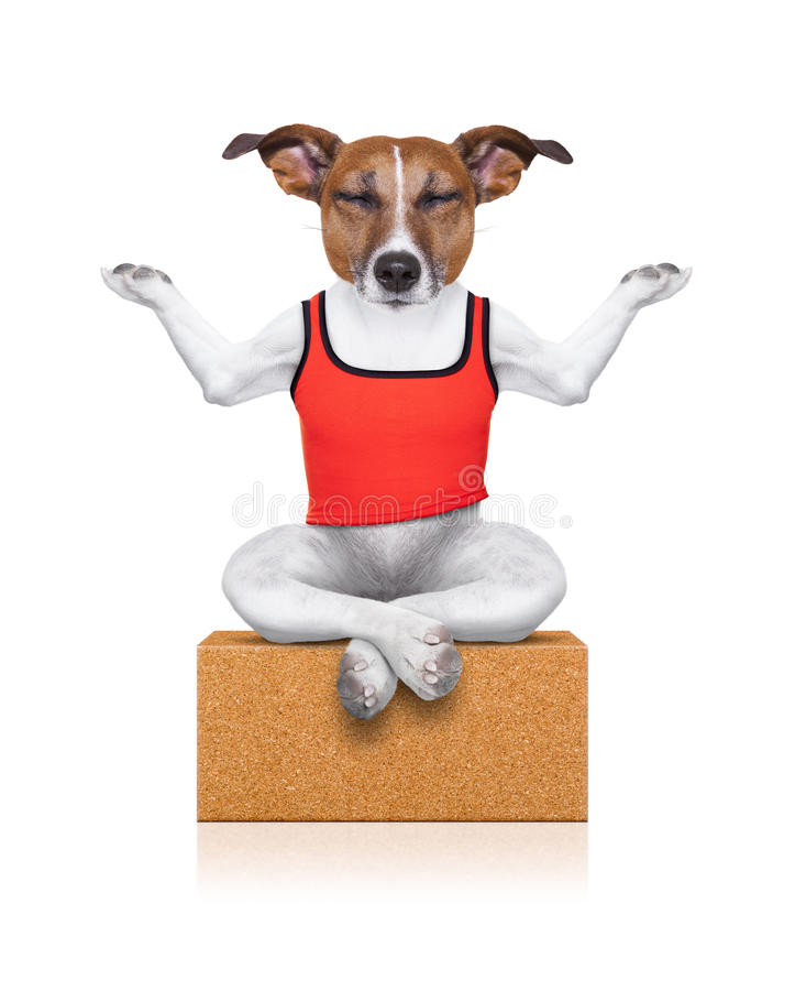 Yoga dog royalty free stock images