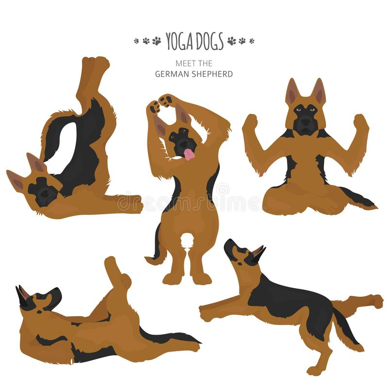 Yoga dogs poses and exercises. German shepherd clipart stock illustration