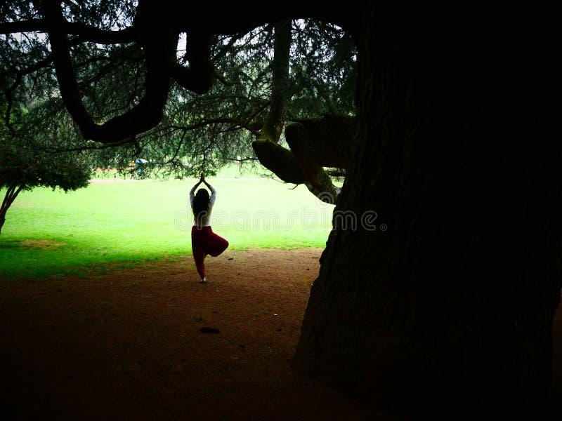 Yogabaumhaltung stockbild