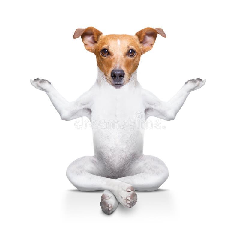 Yogahund royaltyfri fotografi