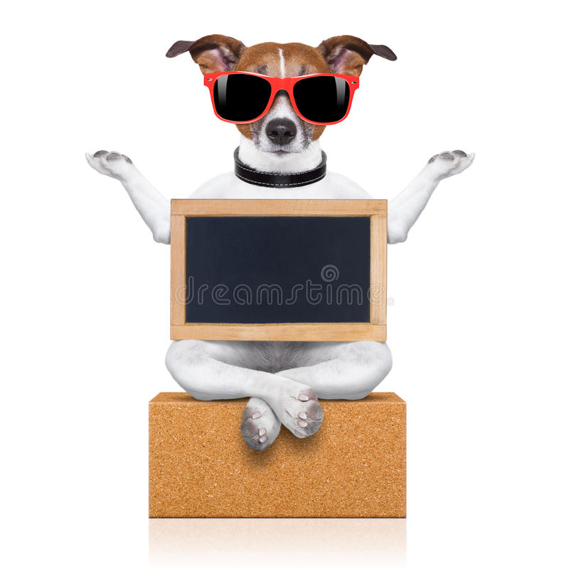Yogahund lizenzfreie stockfotografie