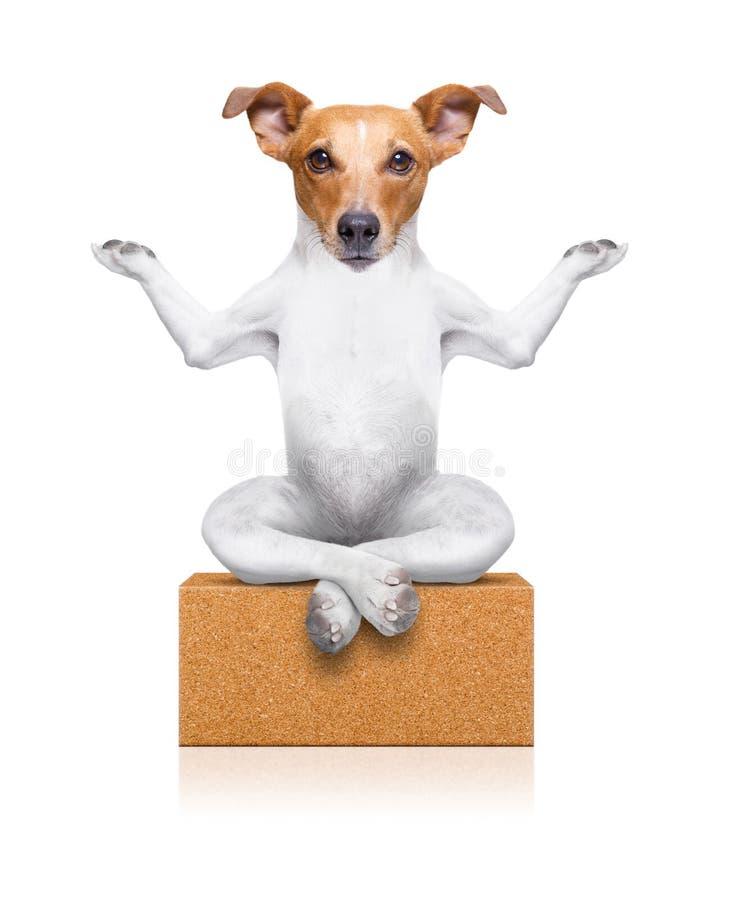 Yogahundeziegelstein lizenzfreie stockbilder