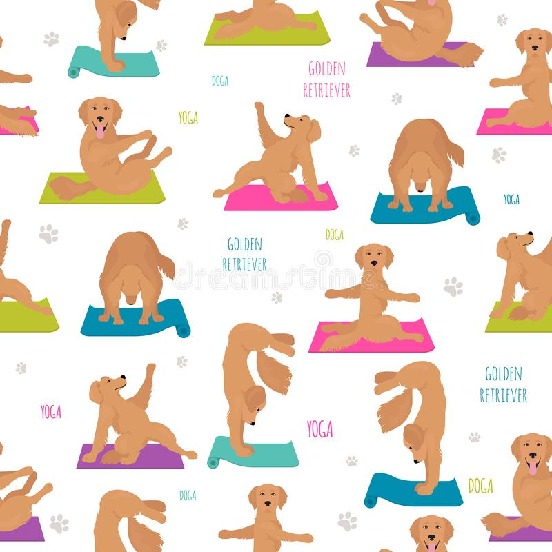 Yogahundkappl?pningen poserar och ?var S?ml?s modell f?r golden retriever royaltyfri illustrationer