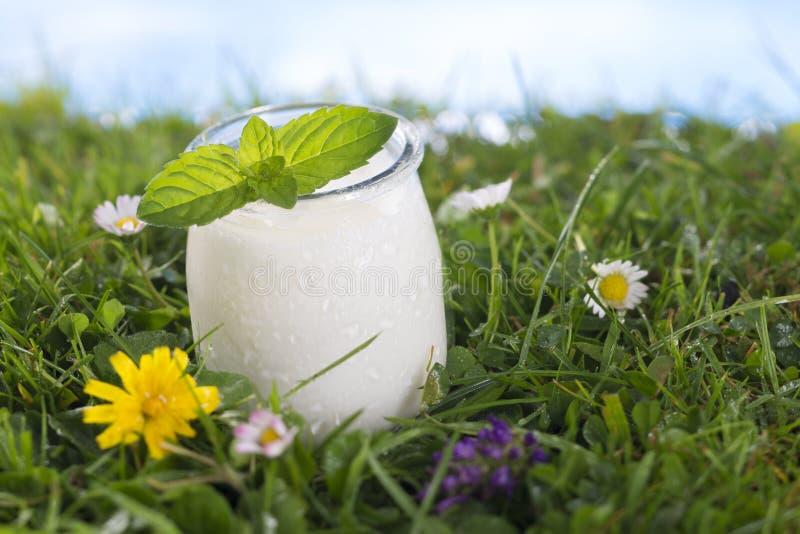 Yoghurt met muntblad op het gras stock afbeeldingen