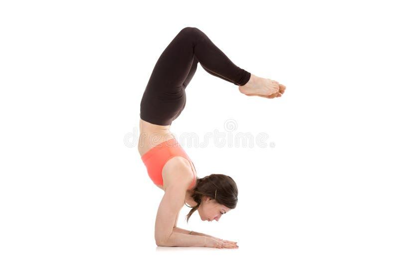 Yogi female in yoga Scorpion Pose Vrischikasana 1 royalty free stock photo