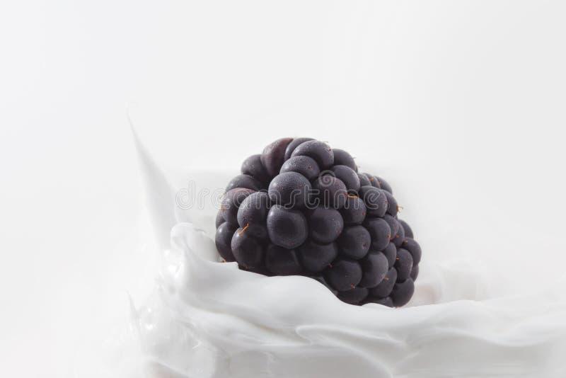 Yogur de Blackberry Baya de Blackberry en leche o yogur foto de archivo libre de regalías