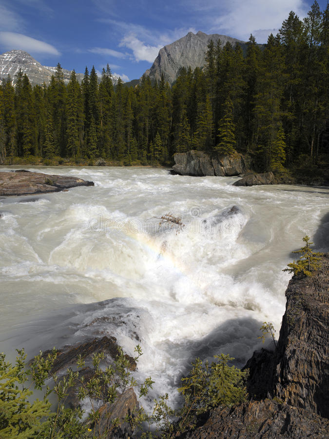 Yoho N.P. - Kicking Horse River - Canada royalty free stock image