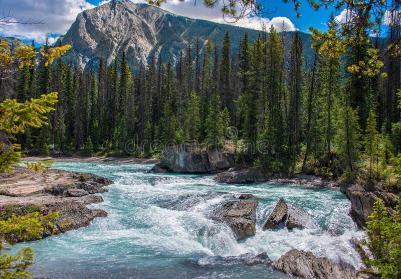 Yoho National Park royalty free stock image