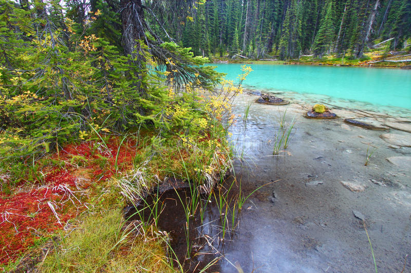 Yoho National Park Pond royalty free stock images