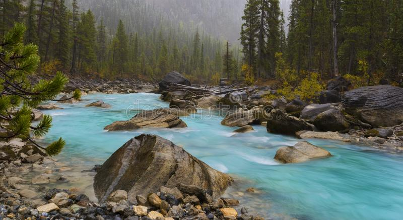 Yoho River im Fall lizenzfreie stockfotografie