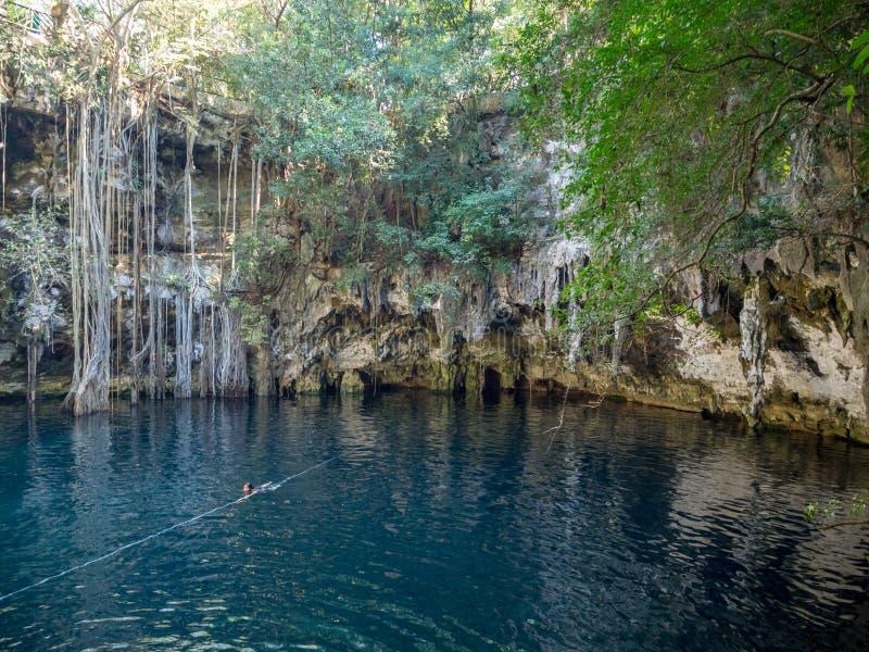 Yokdzonot, Chichen Itza, Messico, Sudamerica: [Cenote di Yokdzonot, atraction turistico di nuoto e di rilassamento naturale dell' fotografia stock