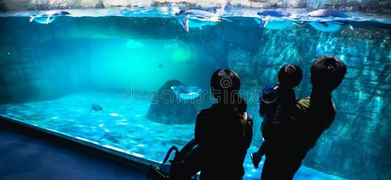 YOKOHAMA, ΙΑΠΩΝΙΑ 13,2019 ΜΑΡΤΙΟΥ οικογένεια που στέκεται και που εξετάζει μια ομάδα αυτοκράτορα penguins στην περιοχή επίδειξης  στοκ εικόνες