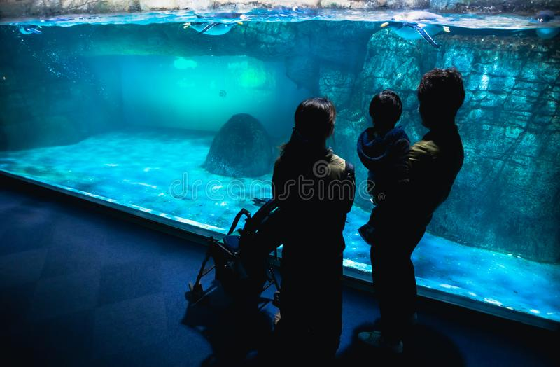 YOKOHAMA,JAPAN MARCH 13,2019 Family standing and looking at Emperor penguins in the display area at Hakkeijima Sea Paradise royalty free stock image