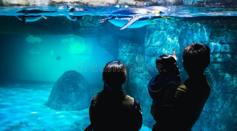 YOKOHAMA,JAPAN MARCH 13,2019 Family standing and staring at a group of Emperor penguins in the display area at Hakkeijima Sea stock photo