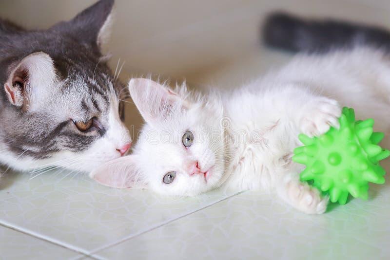 Yong tabby cat con gattino bianco e palla verde immagini stock libere da diritti