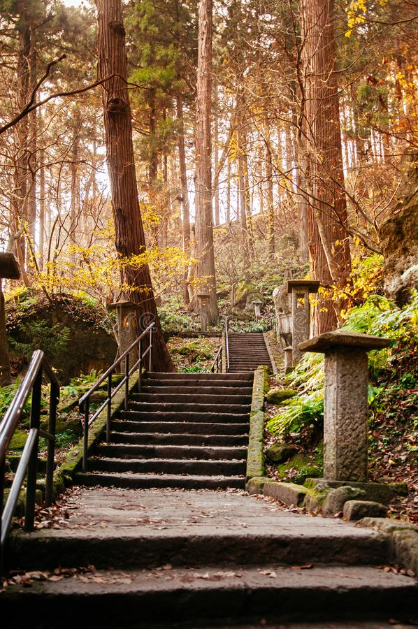 Yonsunmichi path in pine forest at Yamadera Risshaku ji temple, Yamagata - Japan. Yonsunmichi path in pine forest with evening light at Yamadera Risshaku ji stock photography