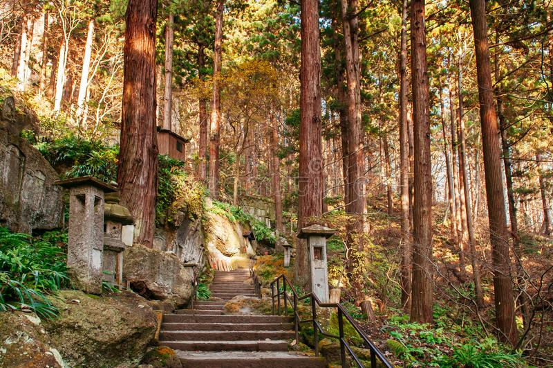 Yonsunmichi path in pine forest at Yamadera Risshaku ji temple, Yamagata - Japan. Yonsunmichi path in pine forest with evening light Sun flare at Yamadera royalty free stock photo