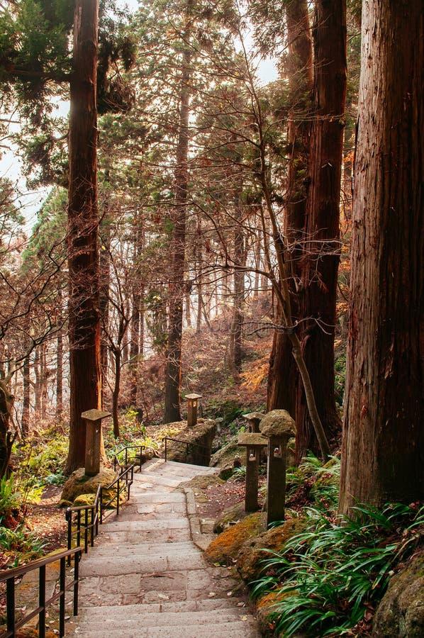 Yonsunmichi path in pine forest at Yamadera Risshaku ji temple, Yamagata - Japan. Yonsunmichi path in pine forest with evening light at Yamadera Risshaku ji royalty free stock image