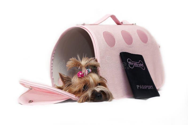 Yorkshir Terrier im Beutel lizenzfreies stockbild