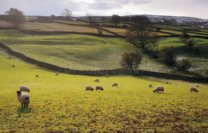 Yorkshire fotos de stock