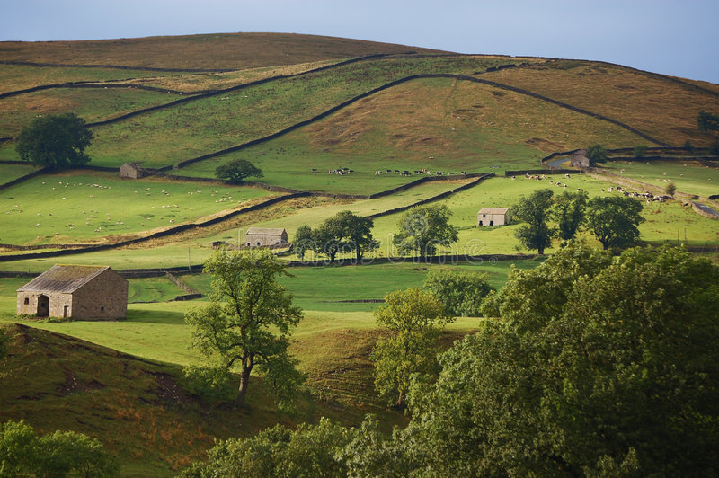 Yorkshire dales evening. Fields form a pattern in the Yorkshire dales on an early summers evening royalty free stock photography