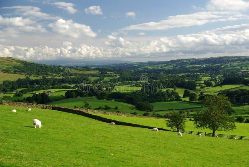 Yorkshire dolin widok obraz royalty free