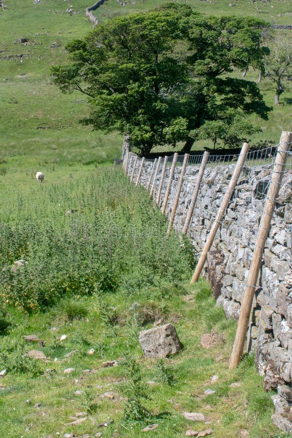 Yorkshire dry stone walling. Yorkshire Dales stock image