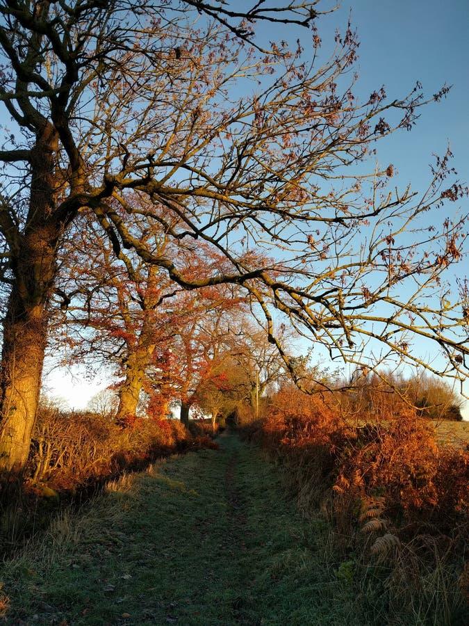 Yorkshire lane royalty free stock photography