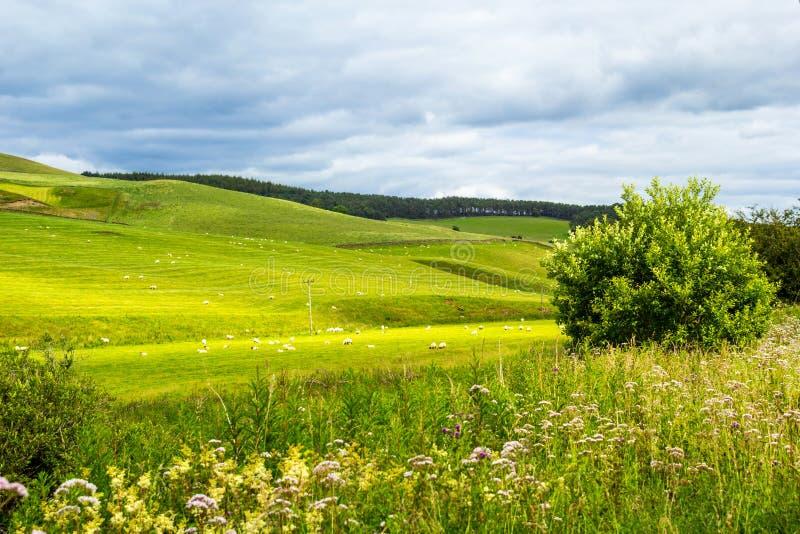 Yorkshire-Täler, Landschaft im Sommer, England stockfotografie