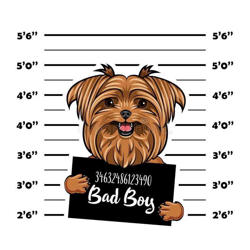 Yorkshire teriera Bad chłopiec Psi więzienie Milicyjny mugshot tło Yorkshire teriera przestępca Areszt fotografia wektor royalty ilustracja