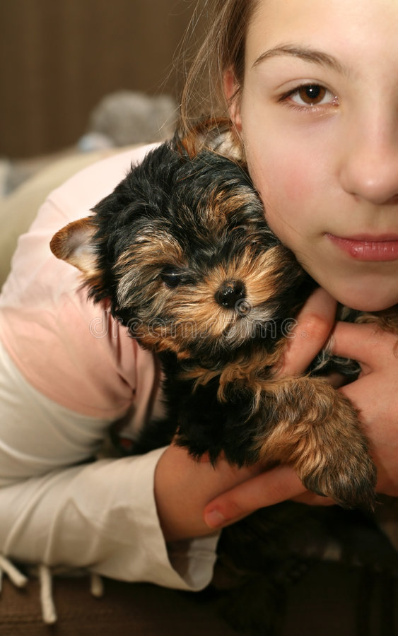 Download Yorkshire terrier stock image. Image of hair, animals - 2161011