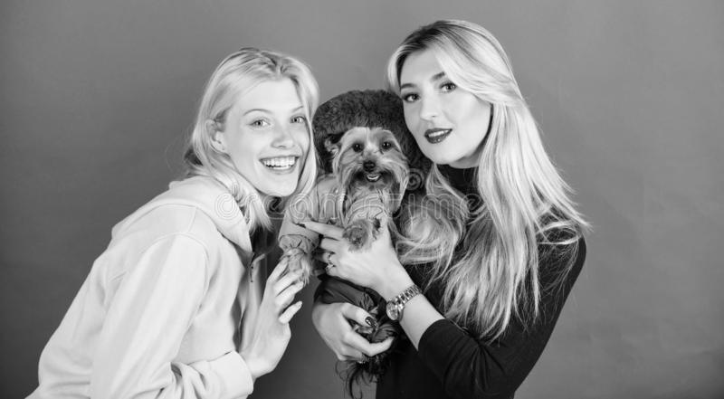 Yorkshire Terrier breed loves socialization. Blonde girls adore little cute dog. Women hug yorkshire terrier. Yorkshire. Terrier is very affectionate loving dog stock photography