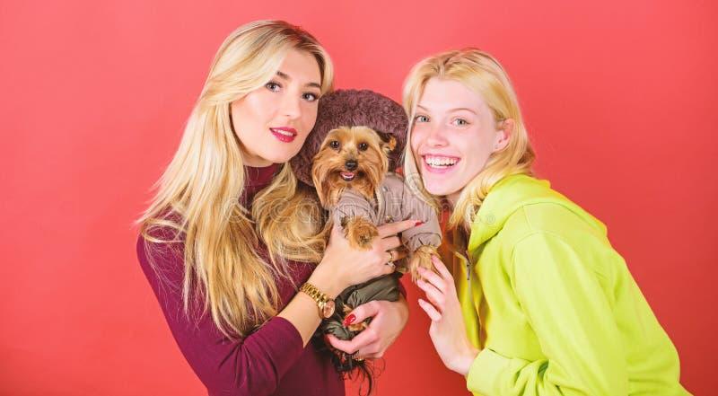 Yorkshire Terrier breed loves socialization. Blonde girls adore little cute dog. Women hug yorkshire terrier. Yorkshire. Terrier is very affectionate loving dog stock images