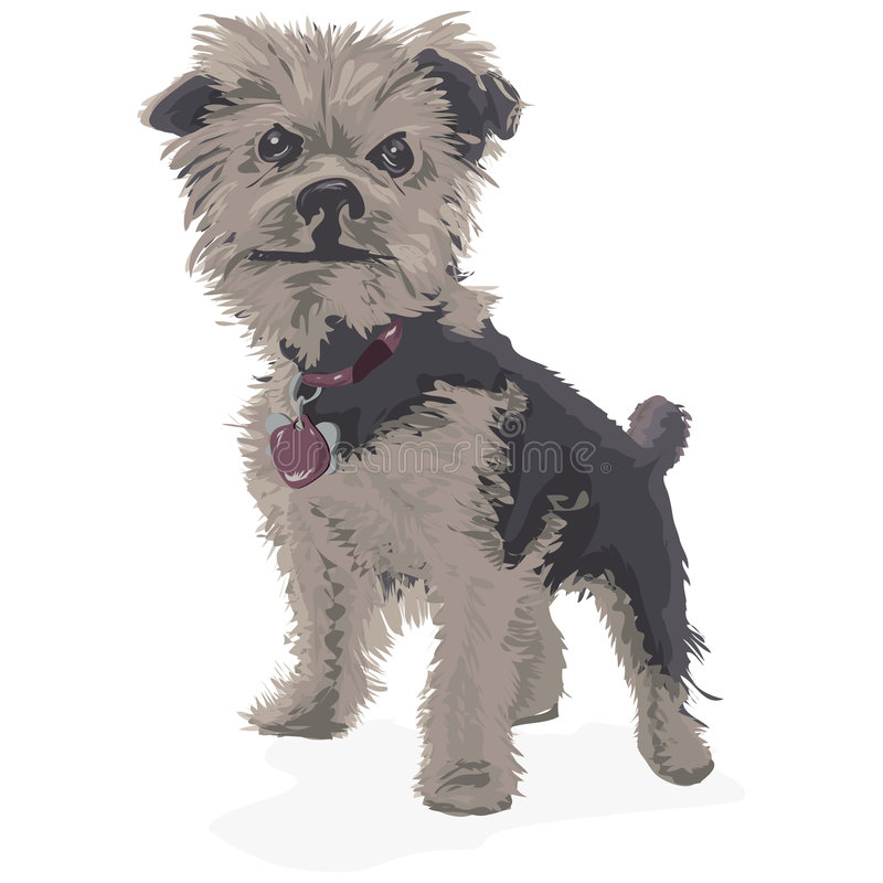 Yorkshire Terrier with clipping path. Illustration with clipping path stock illustration