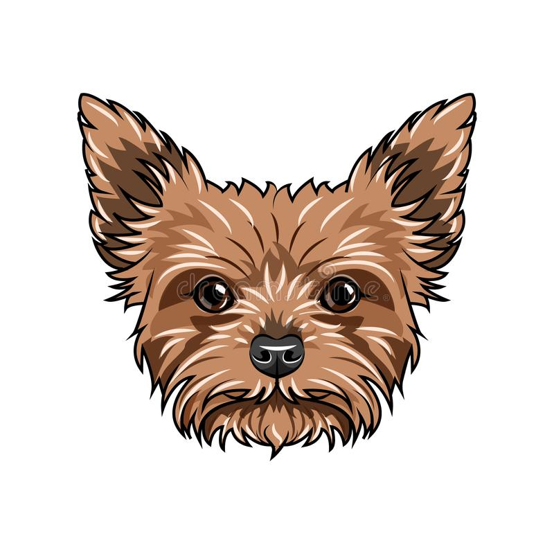 Yorkshire terrier dog portrait. Dog face, head, muzzle. Yorkshire terrier breed. Vector. Yorkshire terrier dog portrait. Dog face, head, muzzle. Yorkshire royalty free illustration