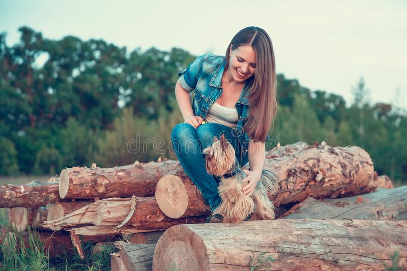 Yorkshire Terrier. A girl with long hair is resting on a pile of sawed trees along with a dog breed Yorkshire terrier outside stock photos