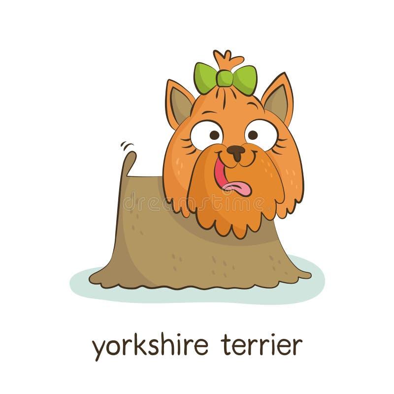 Yorkshire Terrier Hondkarakter op wit stock afbeeldingen
