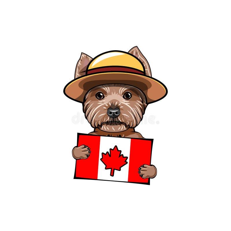 Yorkshire Terrier hund kanadensisk flagga Kort för Kanada daghälsning gullig hundstående vektor royaltyfri illustrationer