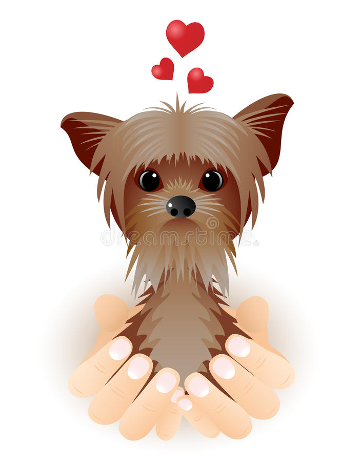 Download Yorkshire Terrier In Love. Royalty Free Stock Photo - Image: 28534175