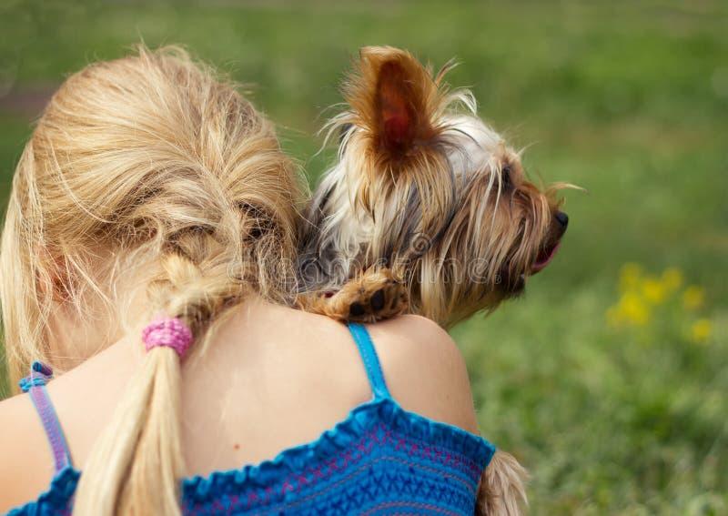 Yorkshire terrier på skuldra av årig flicka 6 se rakt till royaltyfri fotografi