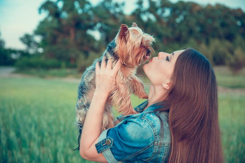 Yorkshire terrier Uma menina com cabelo longo abra?a um yorkshire terrier da ra?a do c?o fora foto de stock royalty free