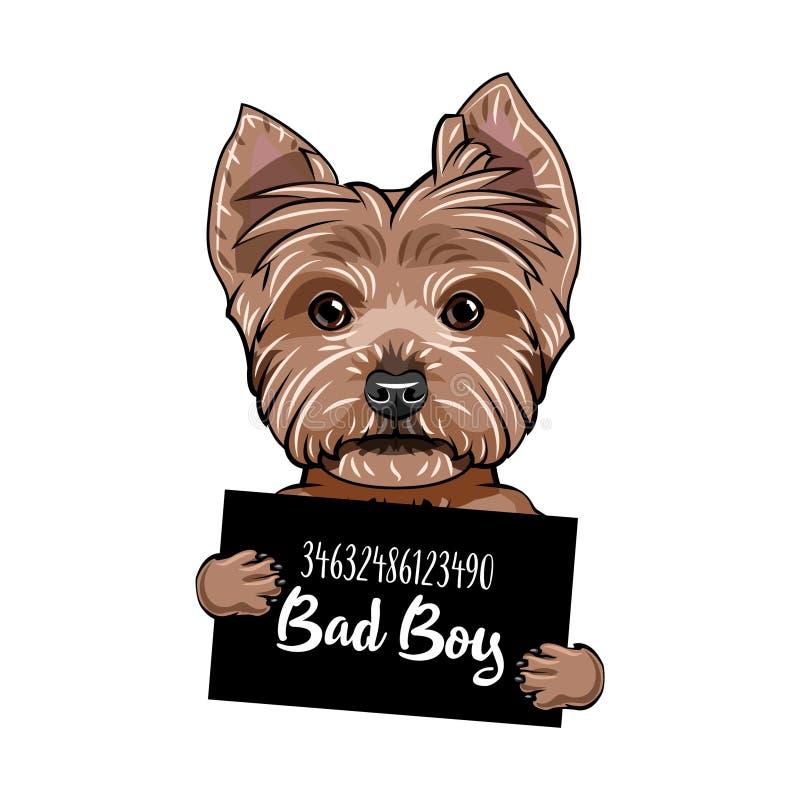 Yorkshire-Terrier unartiger Junge Hundegefängnis Polizei Mugshothintergrund Yorkshire-Terrierverbrecher Vektor lizenzfreie abbildung