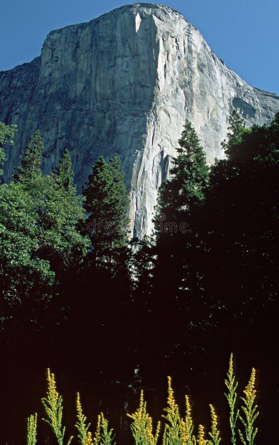 Free Yosemite-03 Royalty Free Stock Images - 7889819