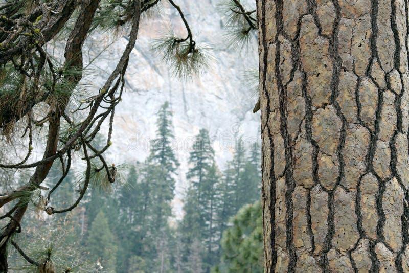 yosemite arkivbild