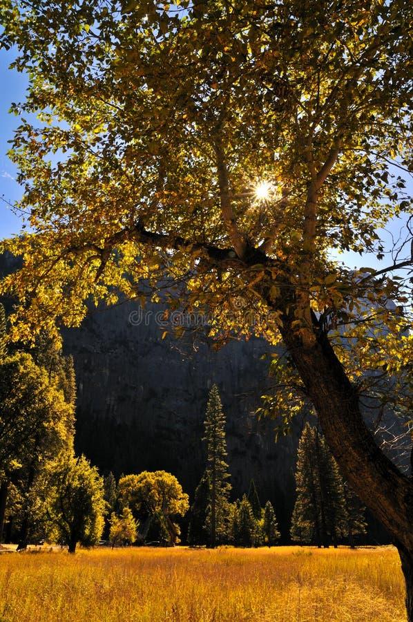 Yosemite in de Herfst stock afbeelding