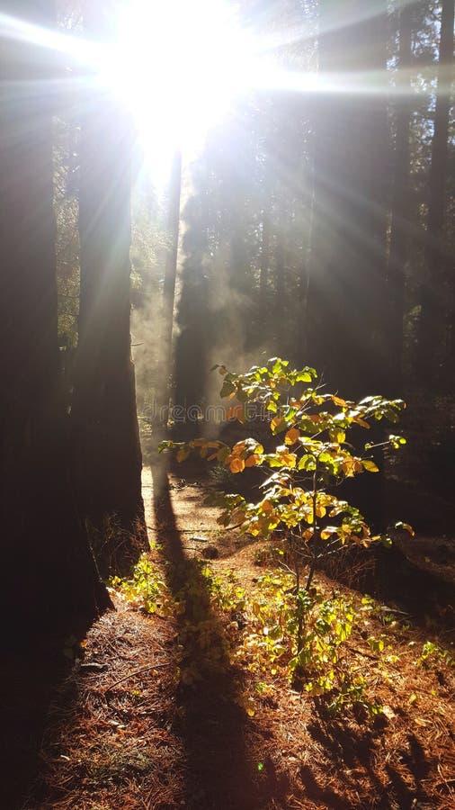 Yosemite de madera rojo fotos de archivo