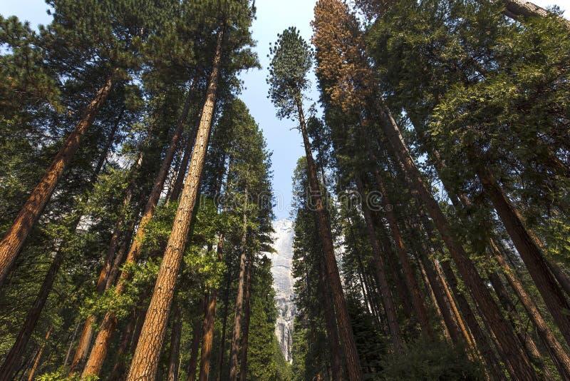 Yosemite dolina, Yosemite park narodowy, Kalifornia, usa zdjęcie stock