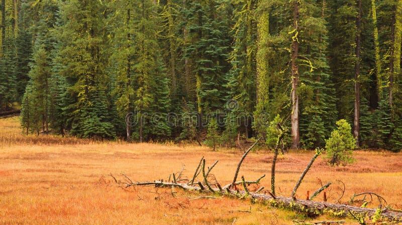 Yosemite-Fall-Szene stockfotos