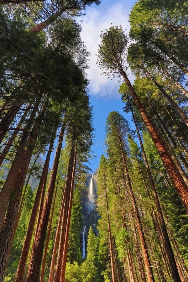 Yosemite Falls стоковые изображения rf